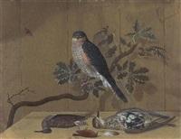 nature morte med strandfugle samt rovfugl på egegren by nicolai peters herm. sohn
