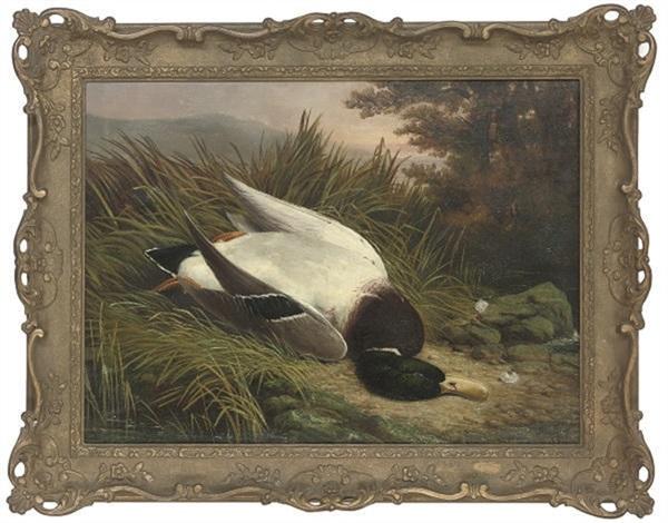 a dead mallard by ben hold