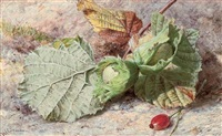 still life of hazelnuts and a rose hip by helen cordelia angell