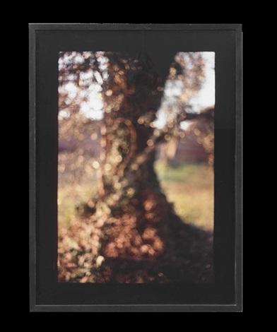 tree trunk tivoli by david armstrong