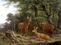 roe deer in woodland by wilhelm reinhardt