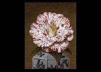 camellias by masahiko yamanaka