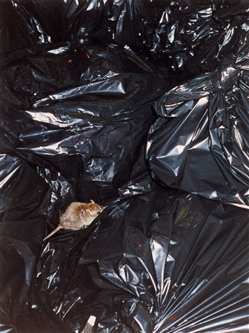 rat on trash bag by wolfgang tillmans