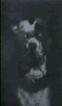 jack-russel-terrier by gabriel-gervais gardin