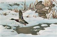 habicht verfolgt stockente in winterlicher bachlandschaft by friedrich reimann