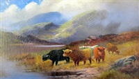 highland cattle by henry calvert