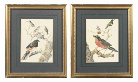 a finch and three hummingbirds near a nest on branches (+ a common redstart and two other birds on branches; 2 works) by aert schouman