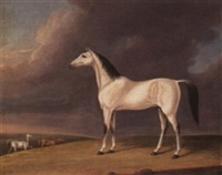 an arabian brought from india by sir john malcolm by j. rogers