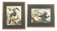 exotic birds in a landscape (+ a great hornbill on a branch in a landscape; 2 works) by aert schouman
