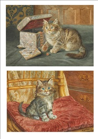kitten beside a jewellery box by wilson hepple