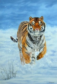 tiger in the snow by sally hynard