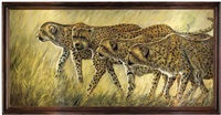 cheetahs on the prowl by john fook
