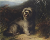 skye terrier by thomas william earl