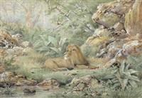 ruhender löwe im unterholz by henri langerock
