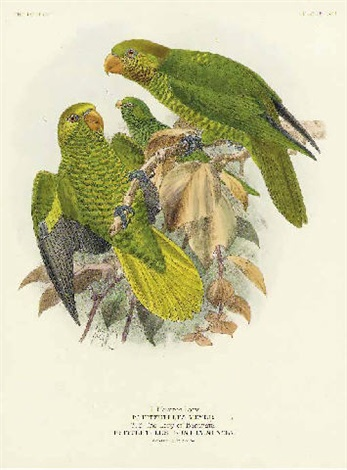 a monograph of the loriidae or brush tonged parrots by johannes gerardus keulemans