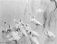 swans in a lake under tree blossom by vernon ward
