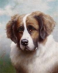 porträt eines bernhardinerhundes by josua reichert