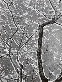 winterliches filigran by siegfried lauterwasser