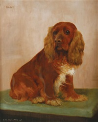a cocker spaniel by frances mabel hollams