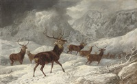 a herd of deer in the highlands by byron webb