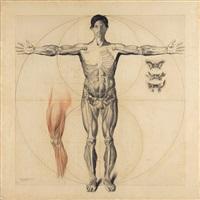 estudio anatómico by claudio bravo