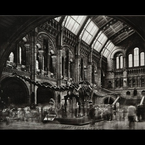 diplodocus 2 natural history museum london by matthew pillsbury