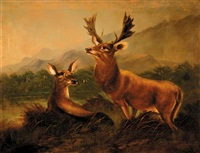wildlife of the highlands by clarence roe