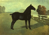 black horse in landscape by daniel smith