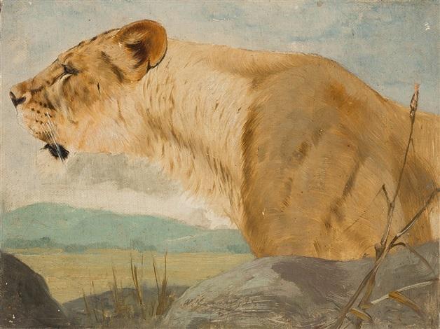kopf einer löwin by wilhelm friedrich kuhnert