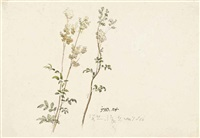 meadowsweet + 3 others; 4 works) by james ward