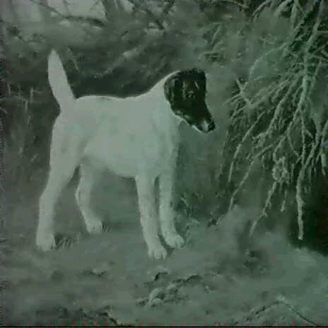weisser terrier vor fuchsbau by g metsu