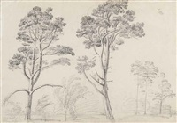 two studies of pine trees at hamilton palace, scotland (+ 4 others; 5 works) by james ward