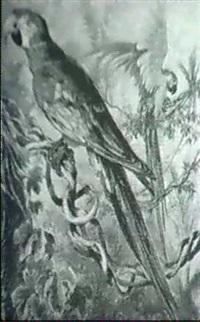papageien im urwald (um 1910) by louis morin