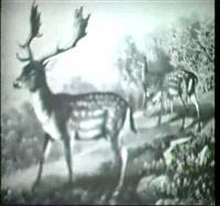 damwild (um 1910) by louis morin