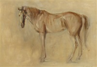 portrait of a horse by con campbell