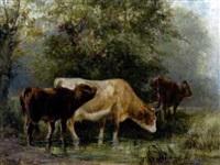 kühe in flachem ufergewässer by ludwig sellmayr