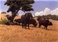 herd of water buffalo resting by arthur radclyffe dugmore