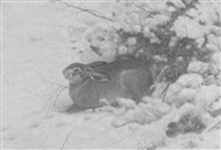 feldhase im schnee by christian haug