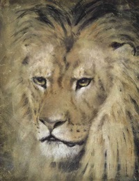 study of the head of a lion by william huggins
