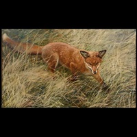 roter fox by otto fikentscher