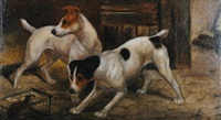 two terriers with a caught rat by e. aistrop