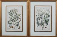 botanicals (8 works) by pierre bouchoz