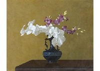 moth orchid and cooktown orchid by mamoru shoji