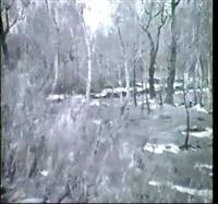 waldstuck by evgeniy ivanovich stolitsa