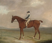racehorse frillo da pieta with jockey up by clifton tomson