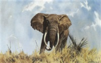elephant by glenn robertson