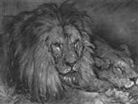 lion and lioness by adelaide renner