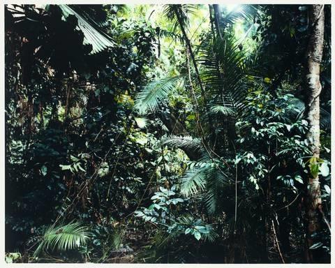 paradise 6 daintree australia by thomas struth