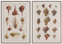 shells (2 works) by albertus sepa