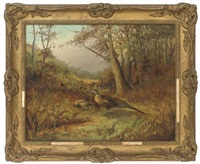 pheasants in bracken, autumn by tom hold